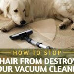 How to Stop Pet Hair from Destroying Your Vacuum Cleaner?