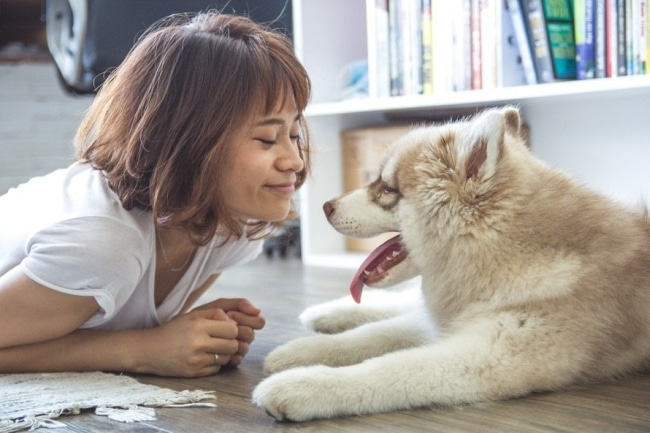 get rid of cat and dog dander
