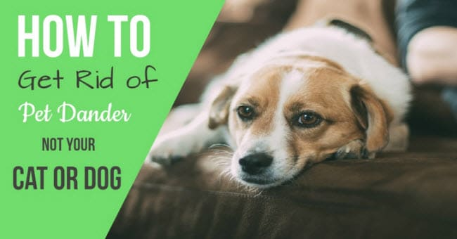 how to get rid of pet dander