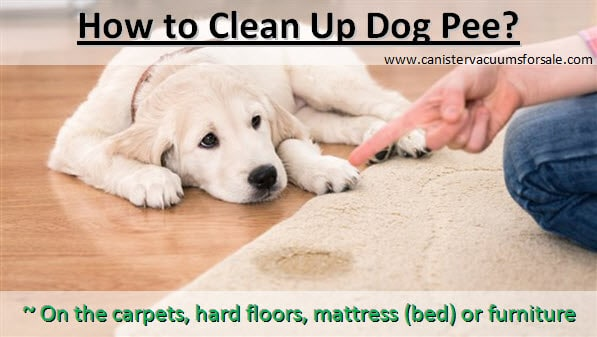 how to clean up dog pee