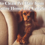 How to Clean Pet Hair from Couch, Car and House Floorings?