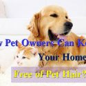 how to keep your homes free of pet hair